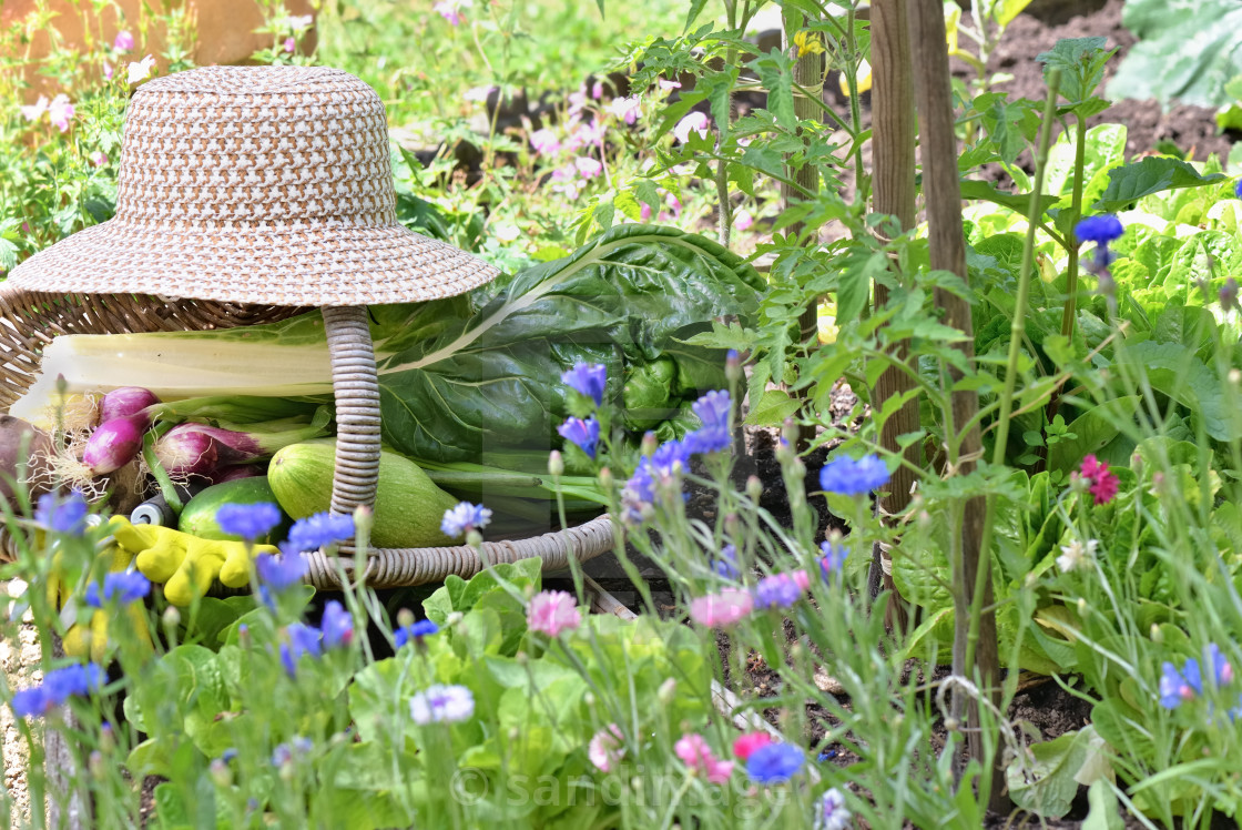 """""""fresh vegetables in a wicker basket with hat placed in a flowered vegetable garden"""" stock image"""