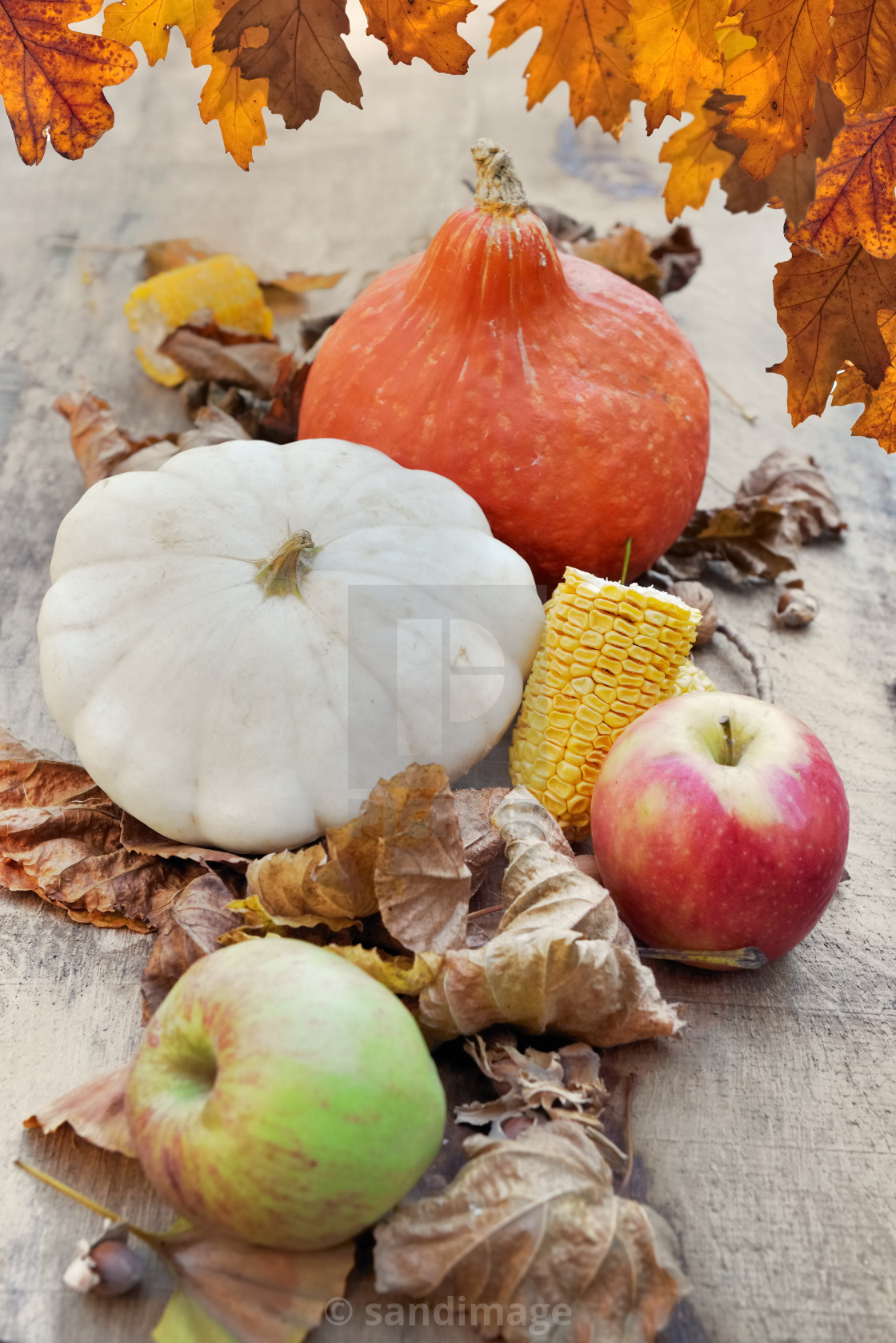 """""""squashes and apples in brown leaves and oak leaves at the top"""" stock image"""
