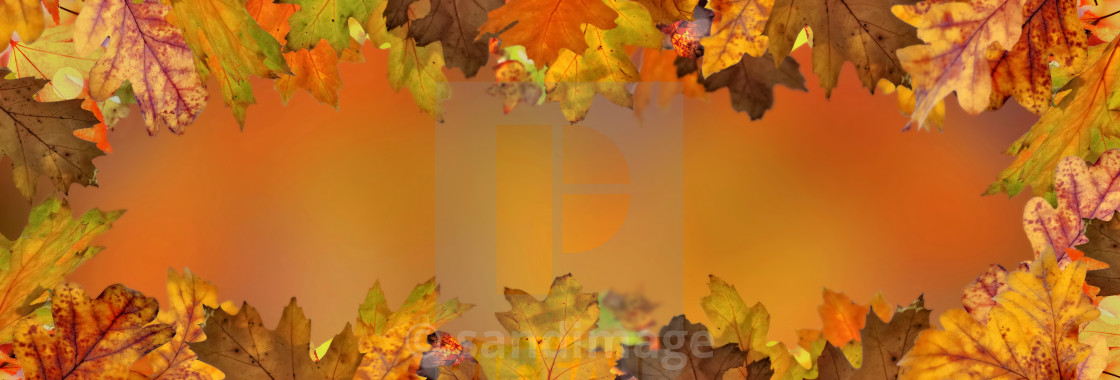 """orange autumnal background with leaf of maple tree"" stock image"