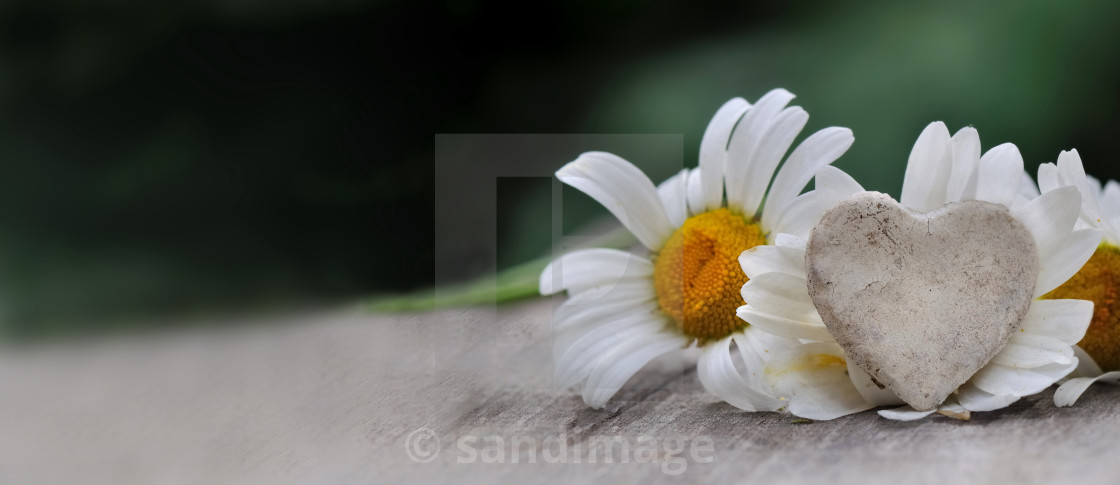"""""""little heart in front of white daisy on a table"""" stock image"""