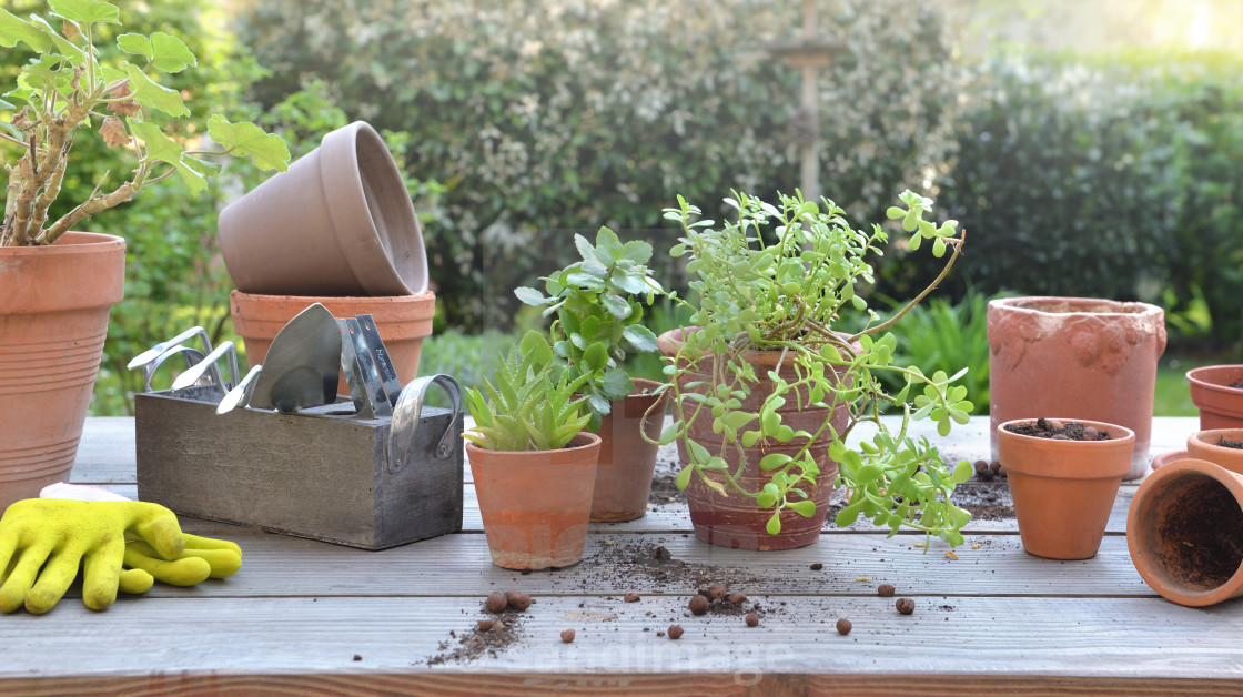 """""""potting plant and garden equipment on a table in a garden"""" stock image"""
