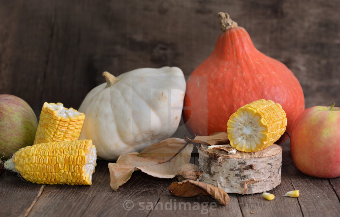 """""""various and colorful autumnal vegetables and fruits and cob of corn cut into pieces"""" stock image"""