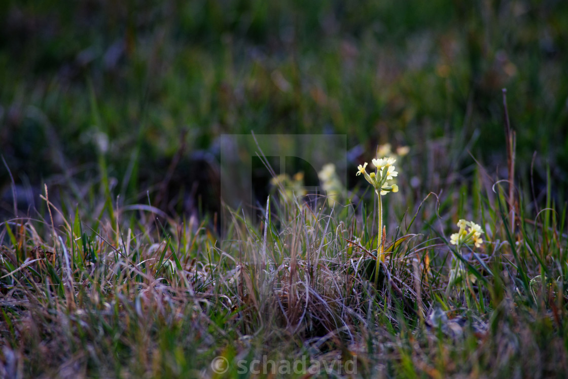 """lonely flower 3"" stock image"