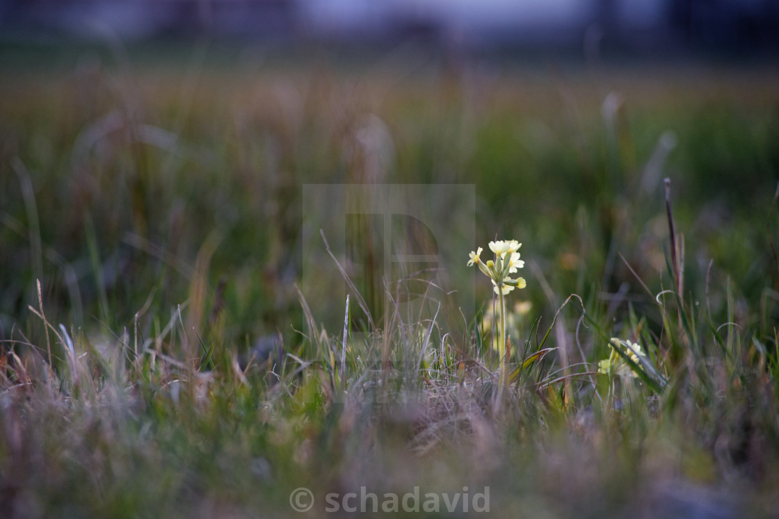 """lonely flower 2"" stock image"