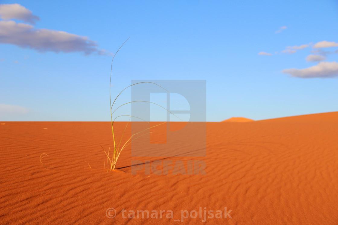 """""""Desert plant"""" stock image"""