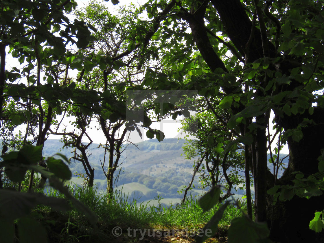 """Quantock Hills through the hedge"" stock image"