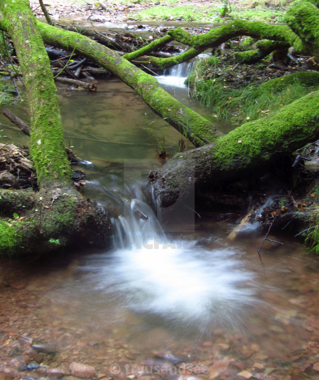 """Stream in the Quantock Hills"" stock image"