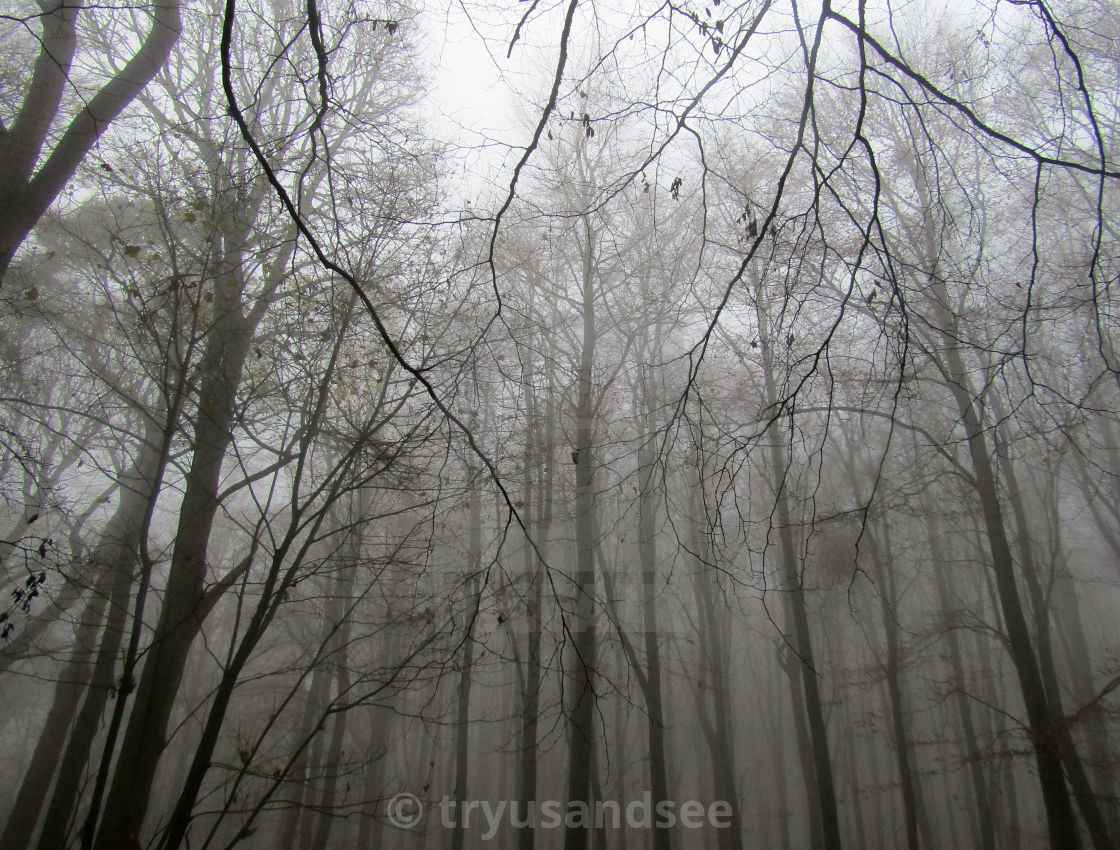 """""""Fog in the Cotswold forest"""" stock image"""