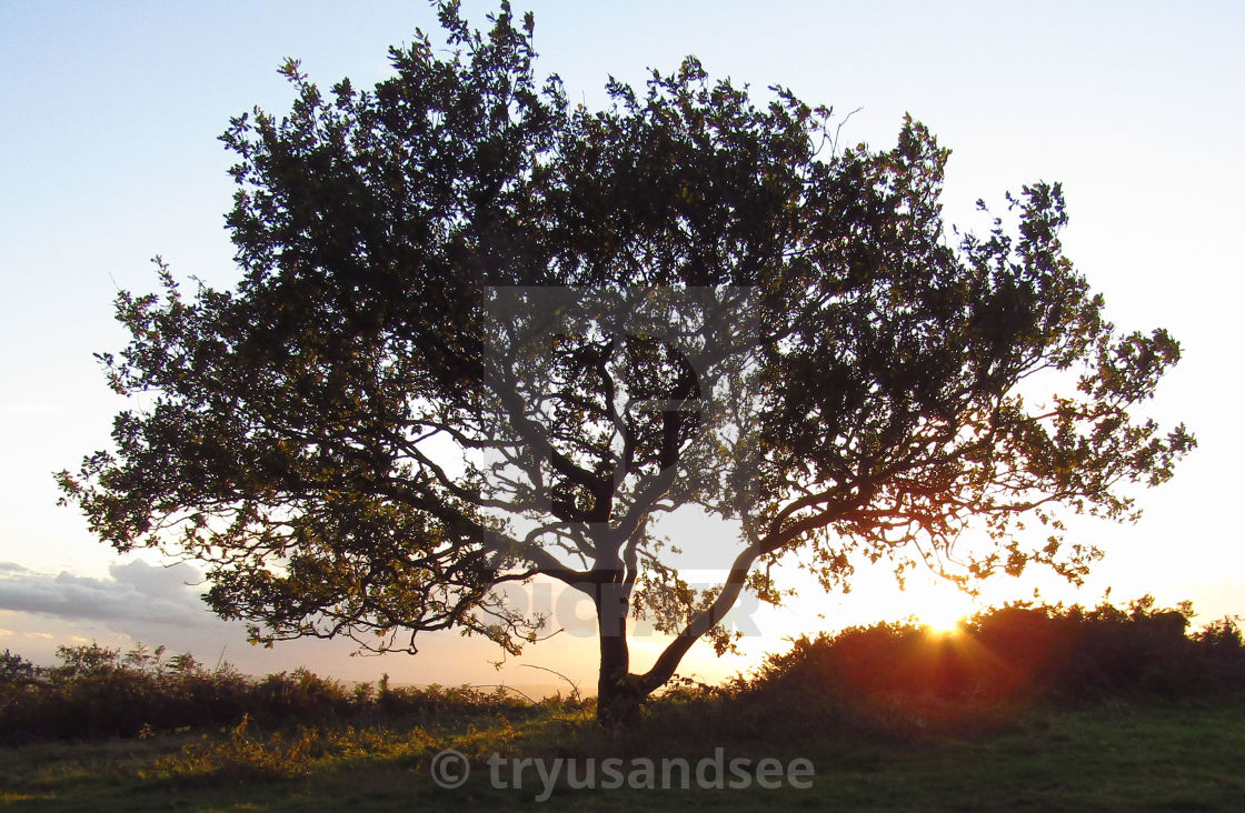 """""""Tree at top of Quantocks at sunset"""" stock image"""