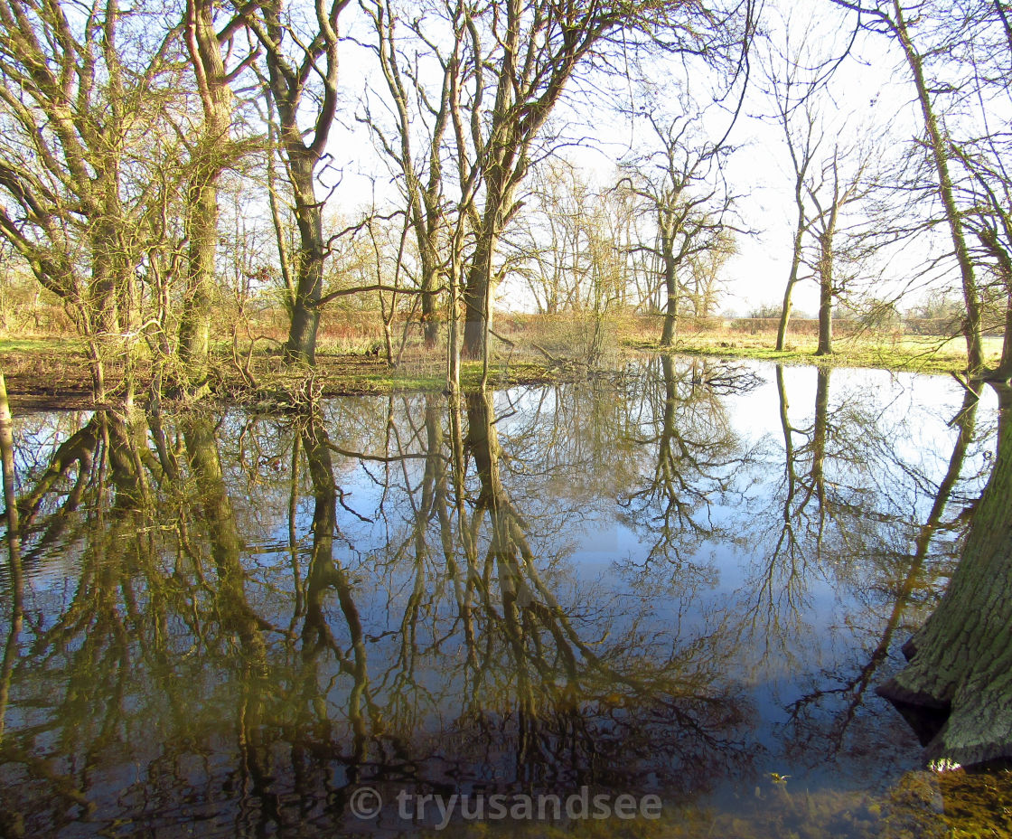 """""""Tree reflections in flooded field"""" stock image"""