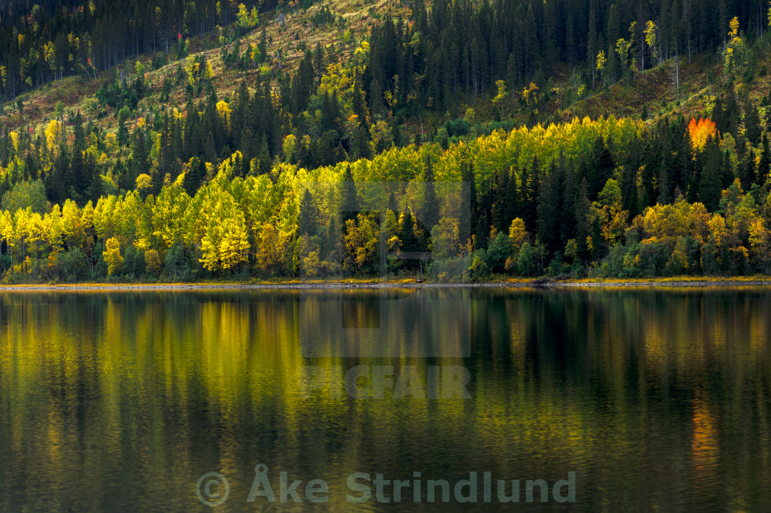 """Autumn green"" stock image"
