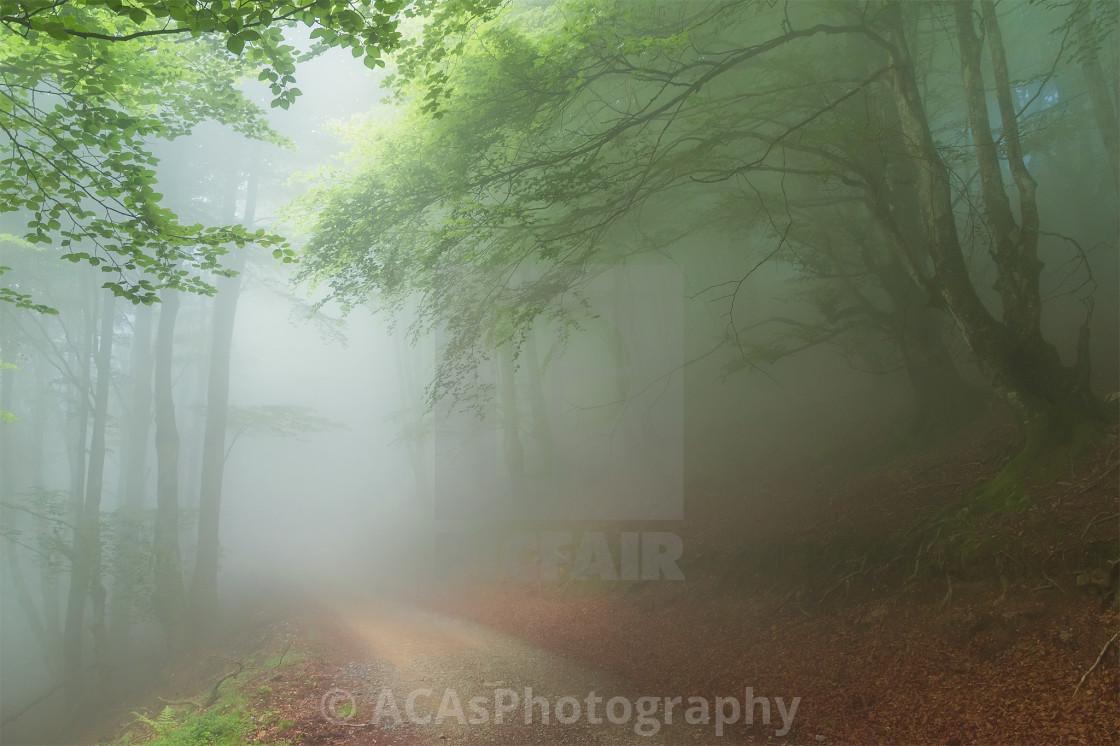 """A foggy path"" stock image"