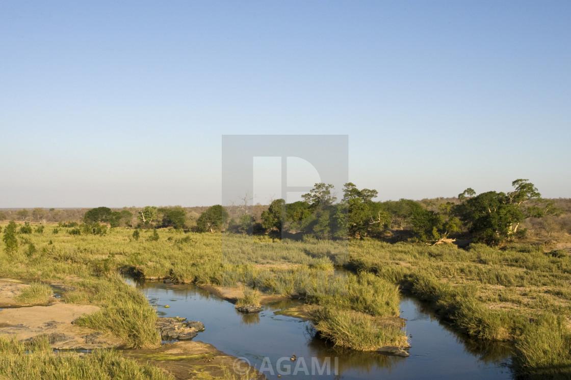 """""""Krugerpark, South-Africa"""" stock image"""