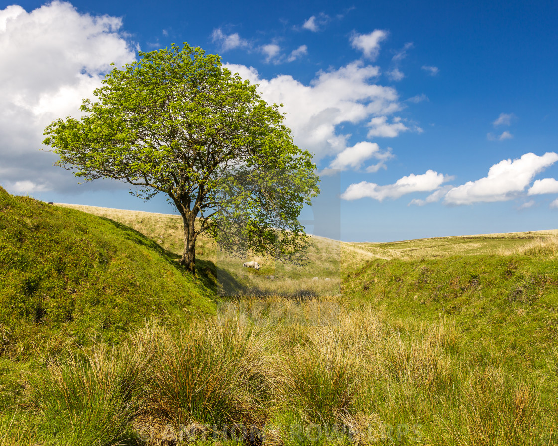 """Single Tree"" stock image"