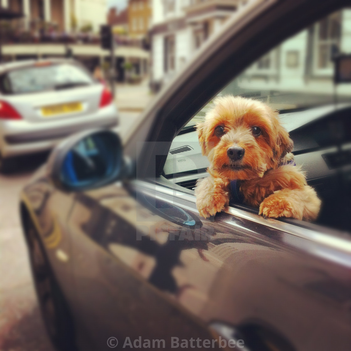 """Little dog or big car?"" stock image"