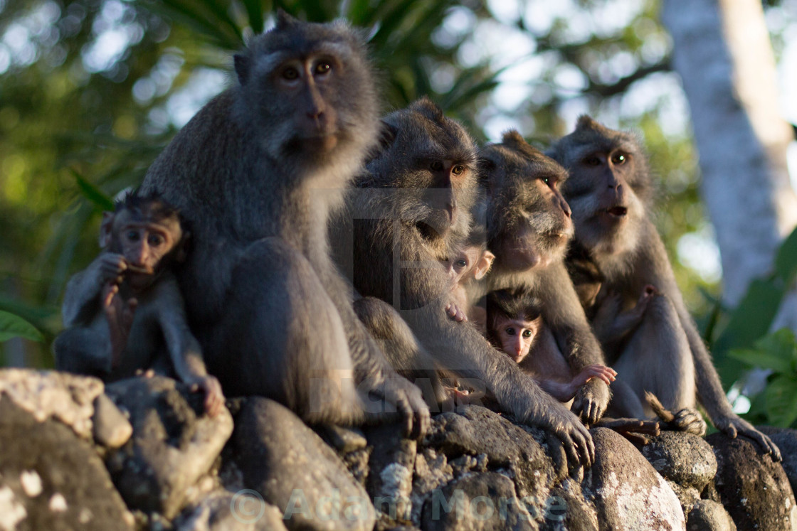"""The Monkeys"" stock image"