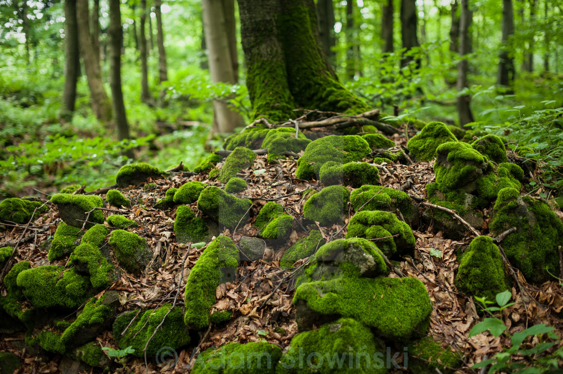 """Stones in the forest"" stock image"