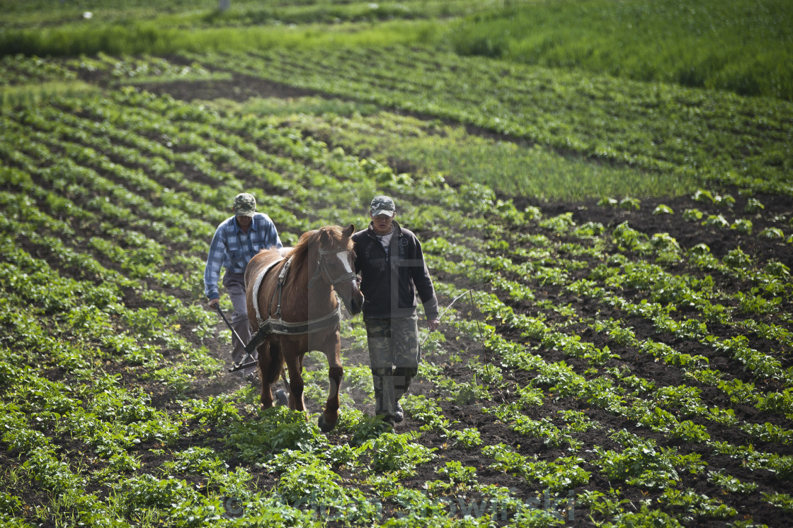 """Farmers"" stock image"