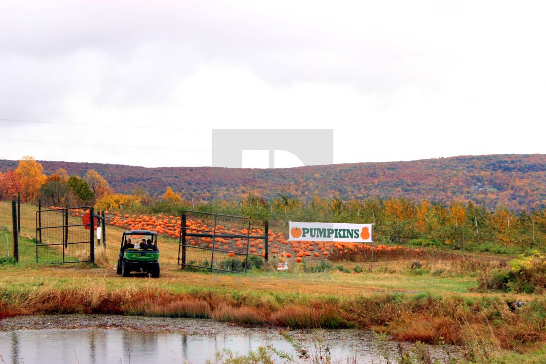 """Pumpkin Patch"" stock image"