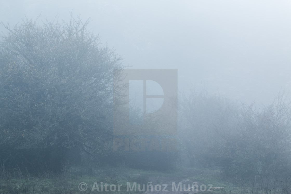 """""""Walking trail in fog in Torcal, Antequera"""" stock image"""