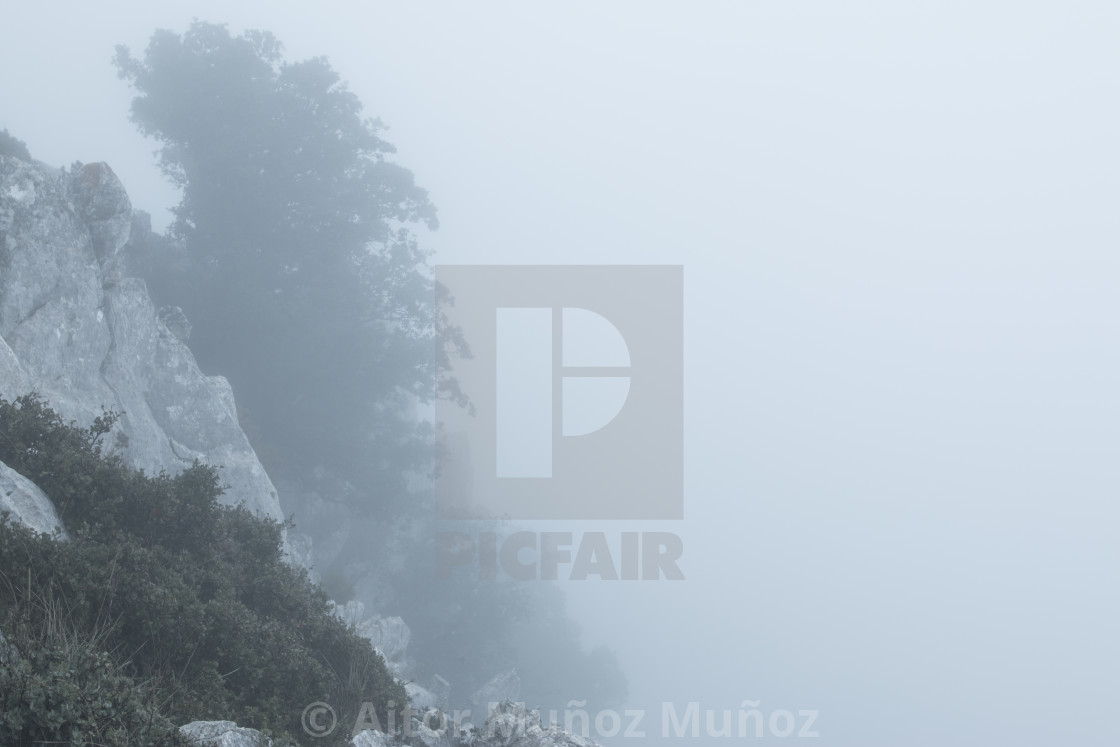 """Landscape of trees on hill slope in fog"" stock image"