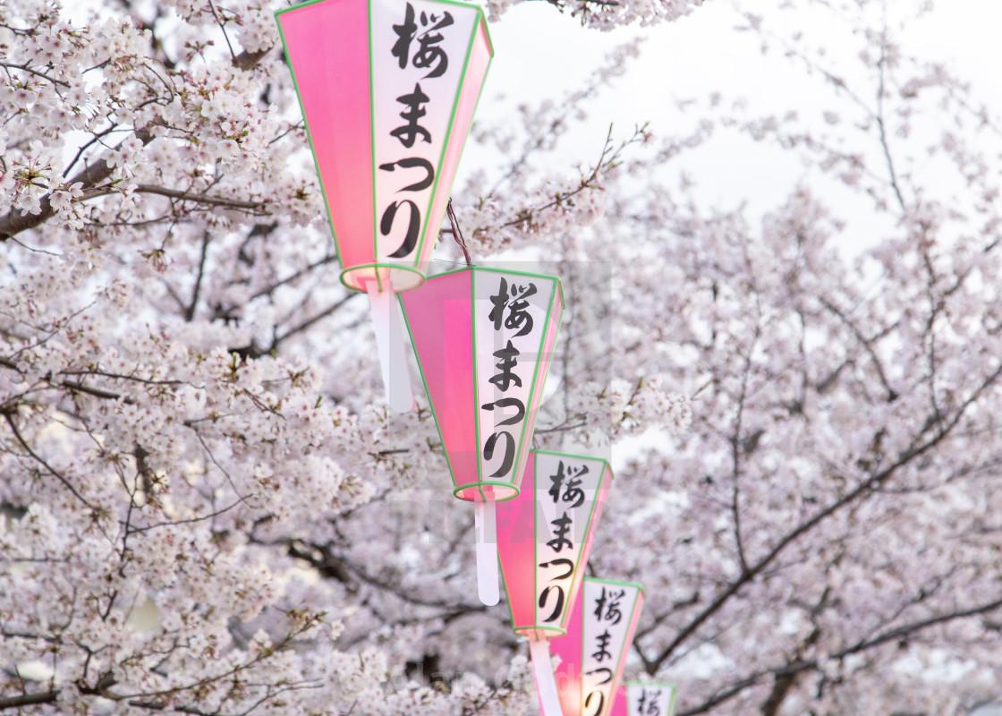 Sakura Season Show