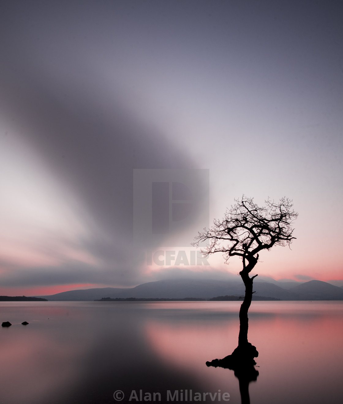 """Lone Tree - Milarrochy Bay"" stock image"