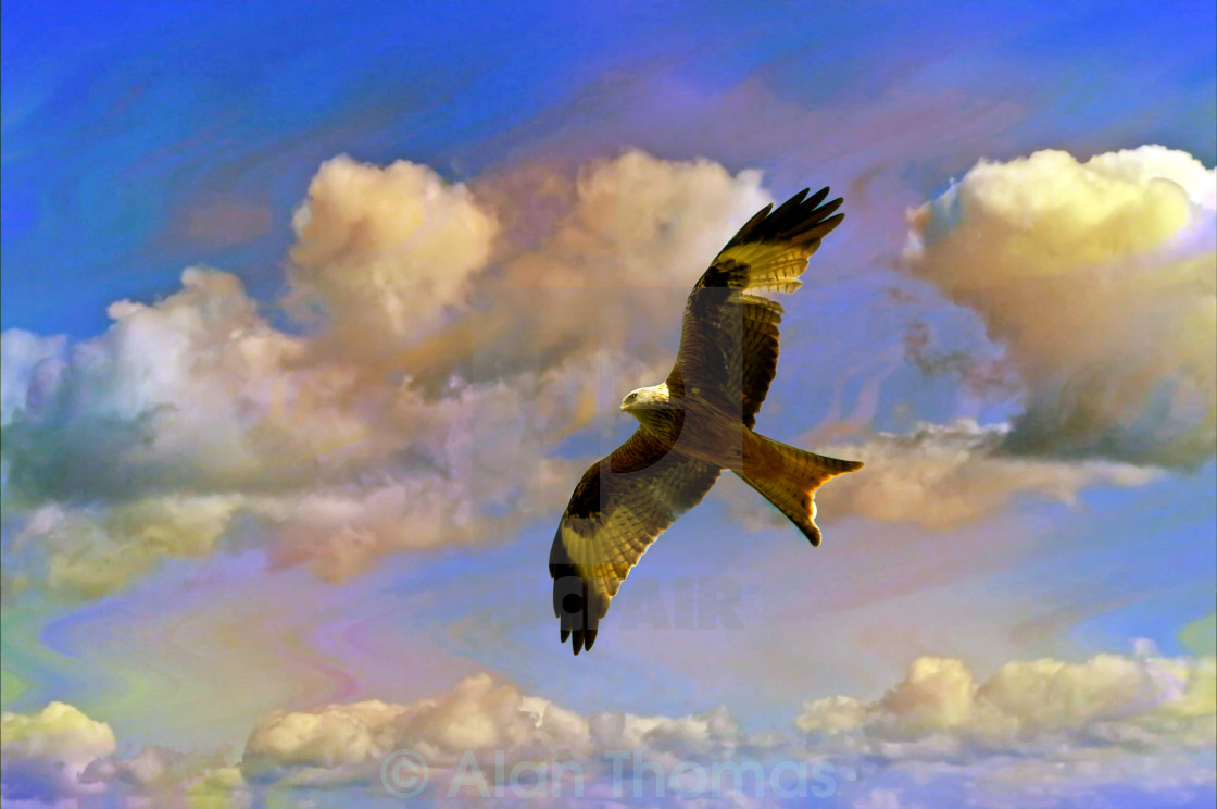 """""""Red Kite hovering"""" stock image"""