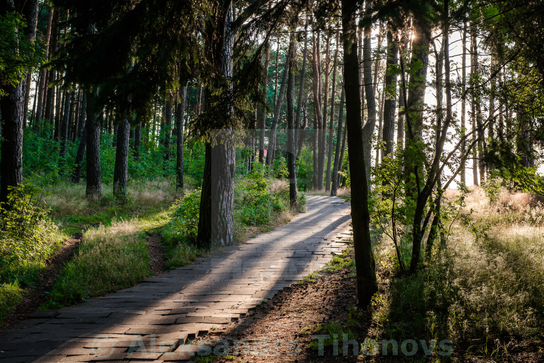 """Footpath through a forest. Nida, Neringa. Lithuania"" stock image"