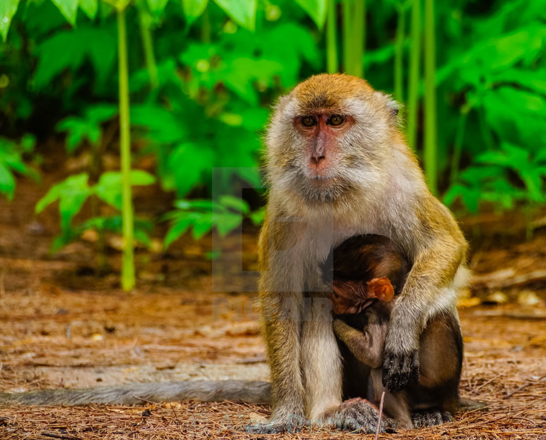 """Monkey with her baby"" stock image"