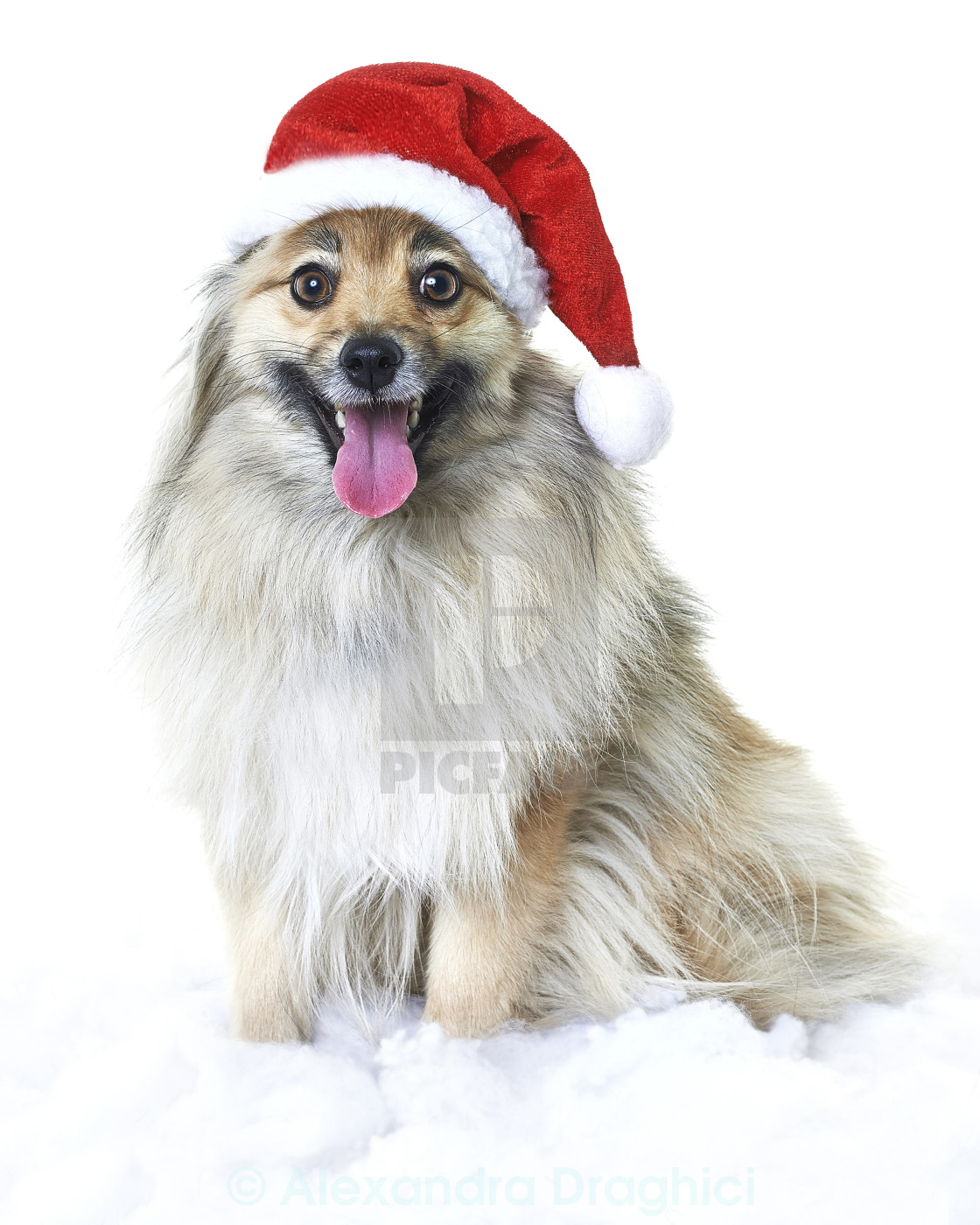 """Dog with santa hat"" stock image"