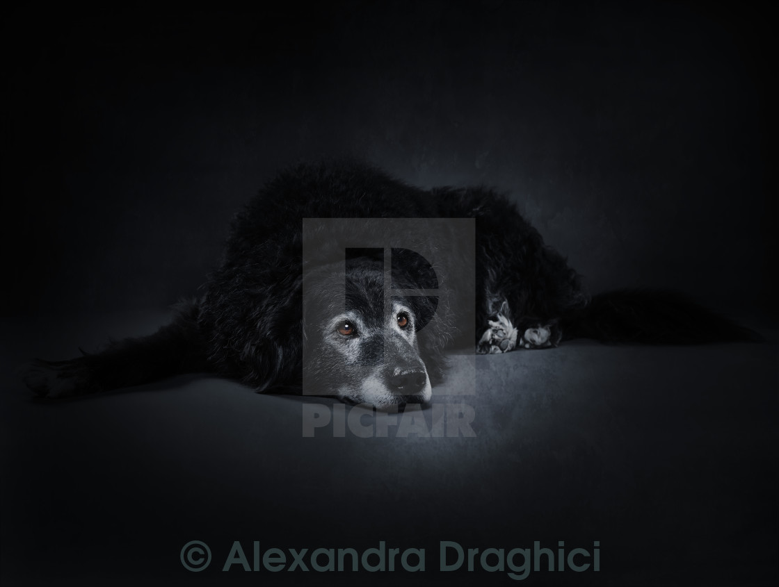 """Old dog"" stock image"