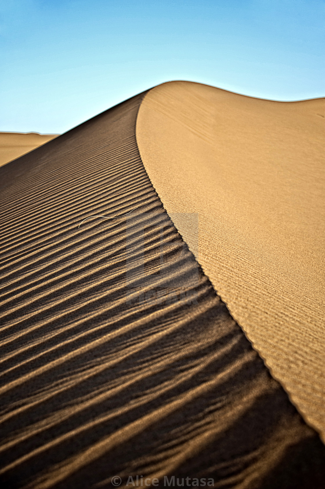 Perfect dune - Sahara Desert