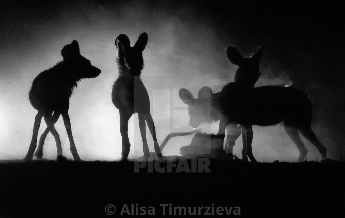 """A pack of wild dogs"" stock image"