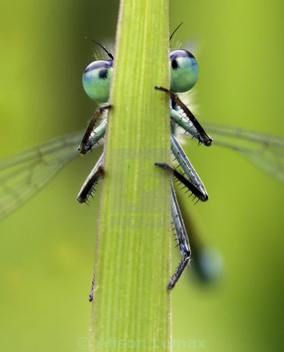 """bug-eyed"" stock image"