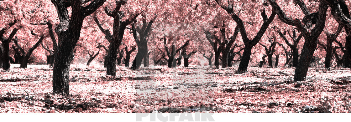 """Almond Grove"" stock image"