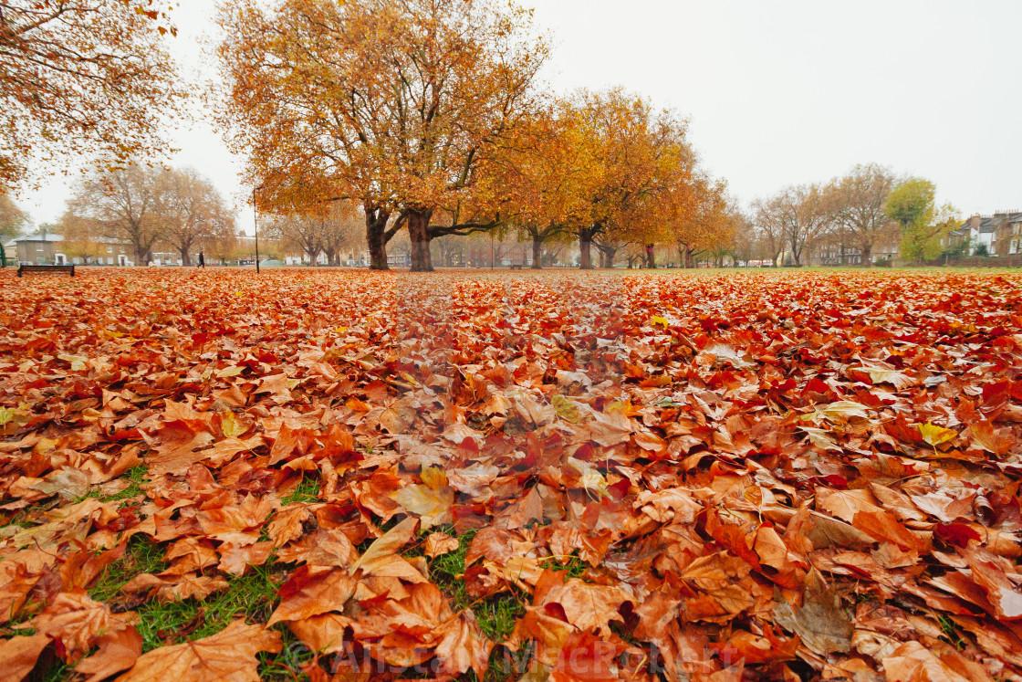 """London Fields in Autumn"" stock image"