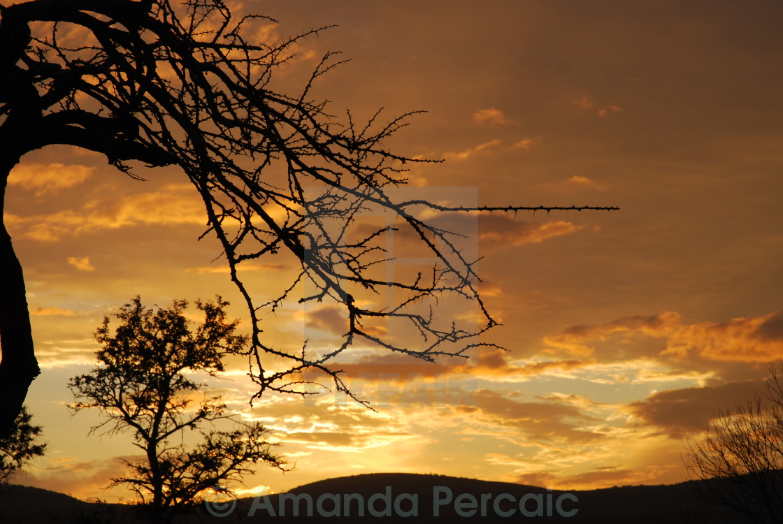 """Thorny Sunset"" stock image"