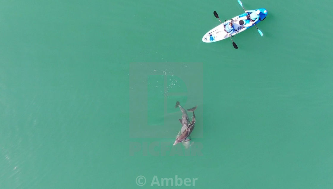 """""""Drone Aerial Of Dolphins Playing Next To Kayakers"""" stock image"""