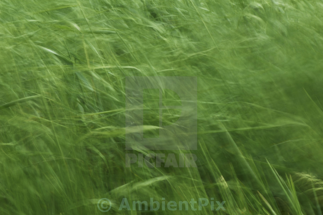 """""""Grass moving in the wind"""" stock image"""