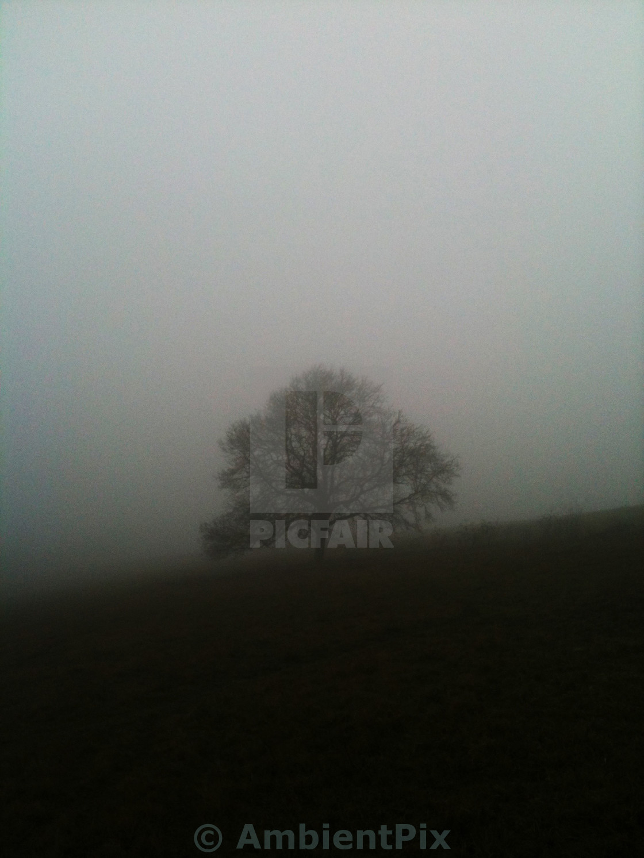 """Tree in winter fog"" stock image"