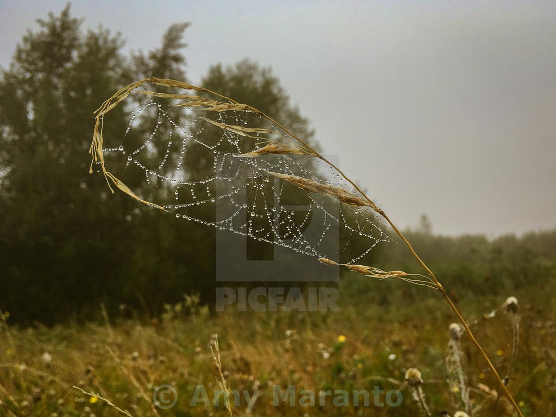 """Nature's Dreamcatcher"" stock image"