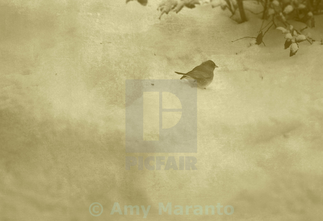 """Small Bird in Winter"" stock image"