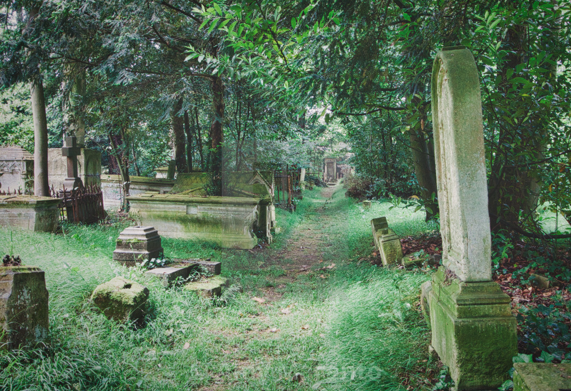 """""""A Path Between Graves"""" stock image"""