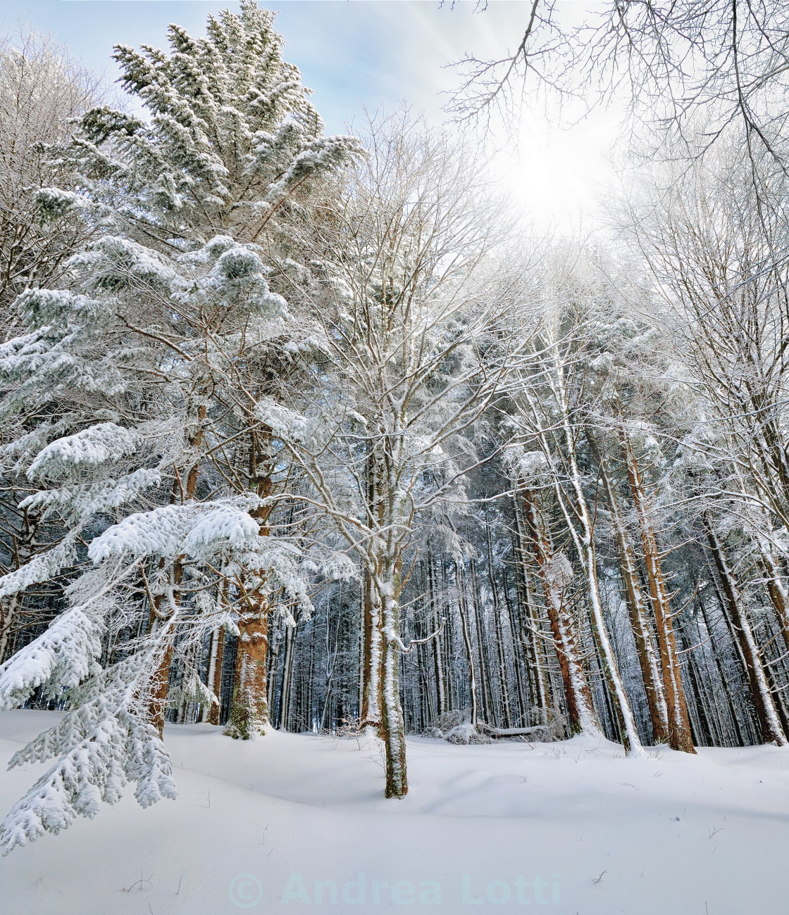 """wood in winter"" stock image"