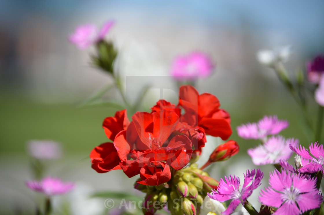 """Flowers"" stock image"