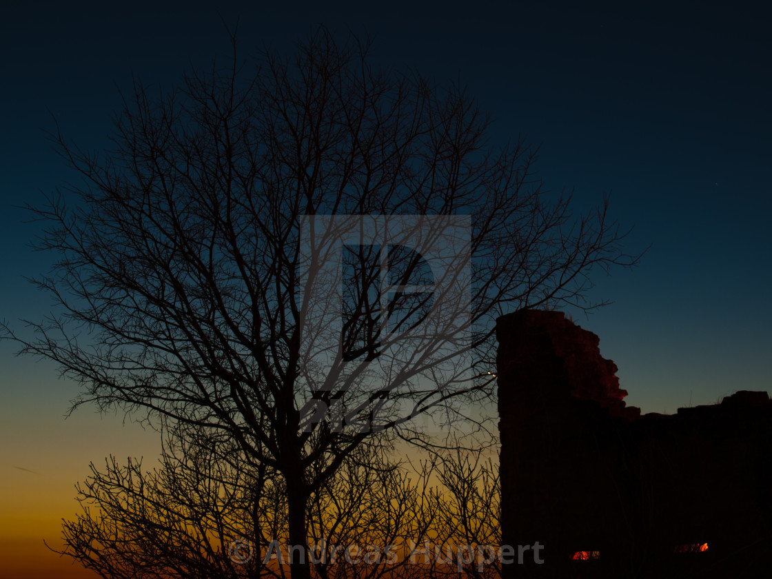 """Tree at Dawn"" stock image"