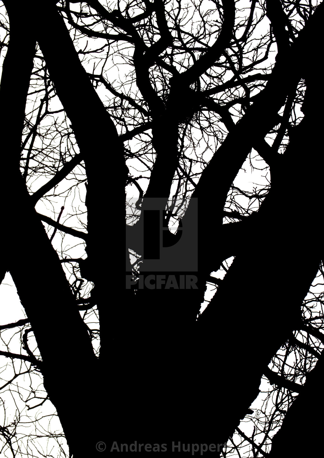 """Branches"" stock image"