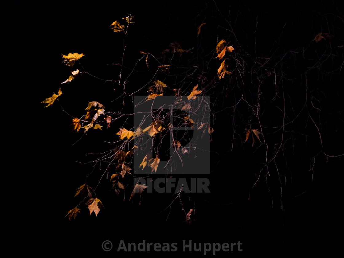 """Herbstlaub"" stock image"