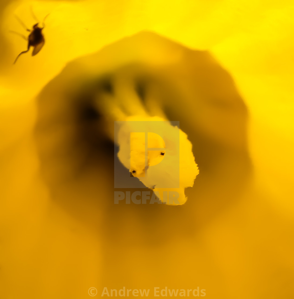 """daff and the fly"" stock image"